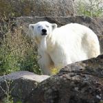 Эффективный трейдинг с White Bear