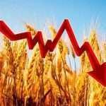 Снижение цен на пшеницу