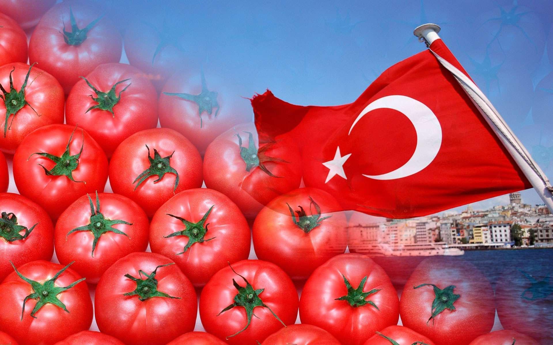 Как турецкий импорт сможет оказать влияние на стоимость томатов в РФ: экспертная оценка