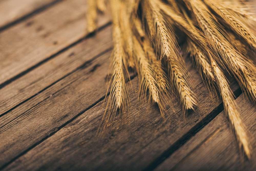 Россия говорит нет пшенице из США