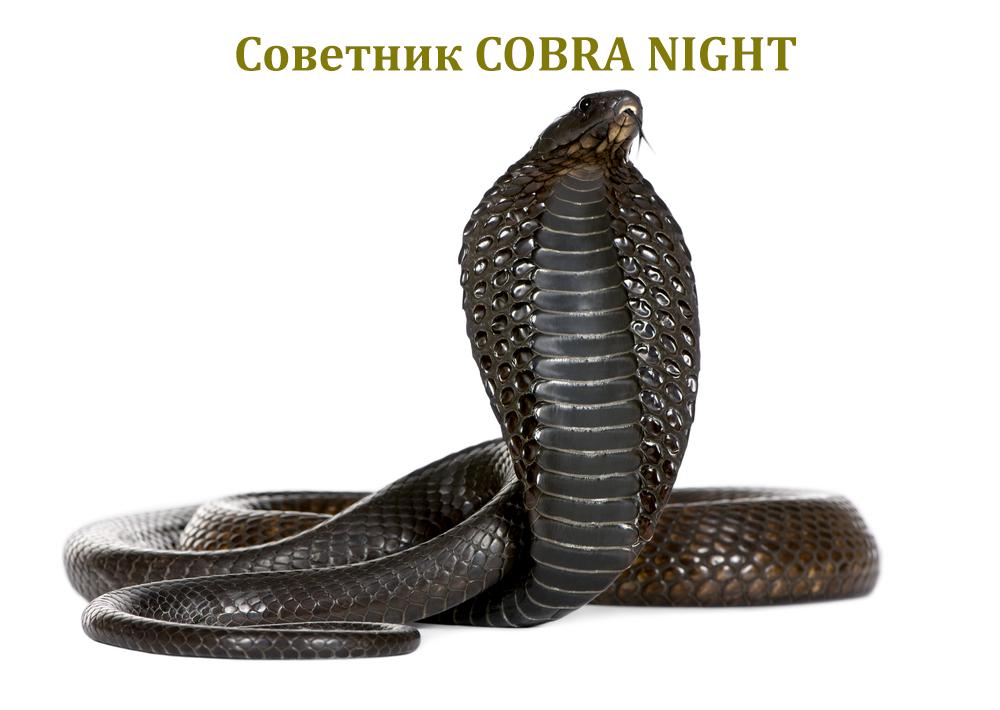 Советник COBRA NIGHT для депозита в 100$